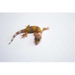 Leopárdgekkó (Eublepharis macularius) - bébi