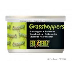 ExoTerra Grasshoppers szöcske