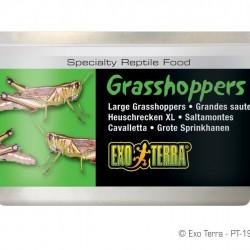 ExoTerra Grasshoppers XL szöcske
