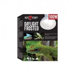 Repti Planet Daylight Frosted 100W flood melegítő izzó