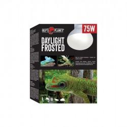 Repti Planet Daylight Frosted 75W flood melegítő izzó