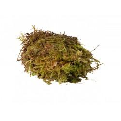 HabiStat Sphagnum Moss small 250g moha