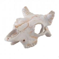 ExoTerra Buffalo Skull koponya S - 11,5x7,5x5,5 cm