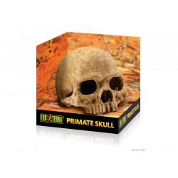 ExoTerra Primate Skull koponya
