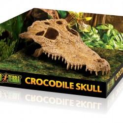 ExoTerra Crocodile Skull koponya