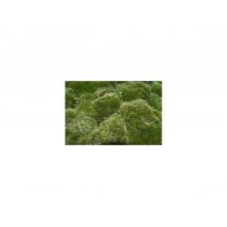 TM-Reptiles Frog Moss élő moha