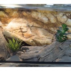 """TM-Reptiles Szakállas agáma kezdőszett """"XS"""" méret - választható összetétel"""