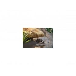 """TM-Reptiles Szakállas agáma kezdőcsomag """"L"""" méret alap"""